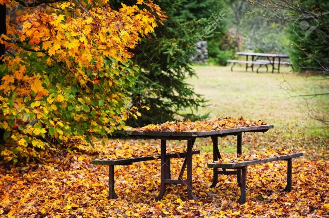 Fall Foliage Picnic Table
