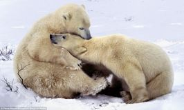 Even the bears take time to cuddle.